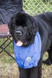 Hund mit Schellfisch Stockbilder