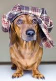 Hund mit Schutzkappe Stockfotografie