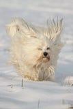 Hund MIT Segelohren Lizenzfreie Stockfotografie