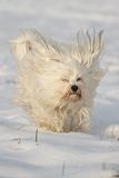 Hund mit Segelohren Royalty Free Stock Photography