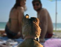 Hund mit seiner Familie Stockbild