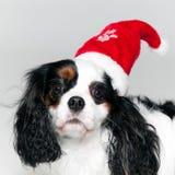 Hund mit seiner Weihnachtsschutzkappe Lizenzfreies Stockbild