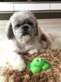 Hund mit Spielwaren Stockbild