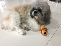 Hund mit Spielzeug Lizenzfreies Stockbild