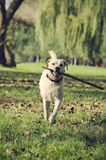 Hund mit Stock Stockfotos