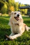 Hund mit Stock Stockbild
