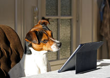 Hund mit Tablette Stockfotografie