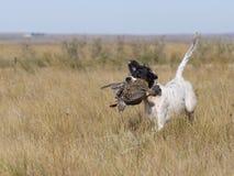Hund mit Waldhuhn stockfoto