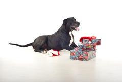 Hund mit Weihnachtsgeschenken Lizenzfreies Stockfoto