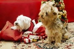 Hund mit Weihnachtsgeschenken stockfotos