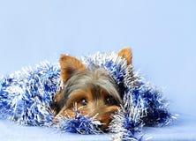 Hund mit Weihnachtsgirlande Stockbilder