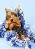 Hund mit Weihnachtsgirlande Lizenzfreies Stockbild