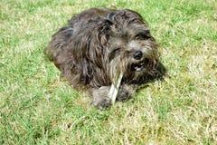 Hund mit zahnmedizinischem Steuerknüppel stockbild