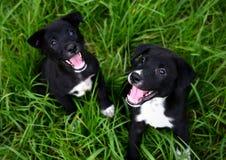 Hund mit zwei Welpen, der auf Gras sitzt: Nahaufnahme Stockfotografie