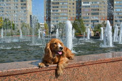 Hund nära springbrunnen Royaltyfri Bild
