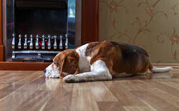 Hund nära till en spis fotografering för bildbyråer