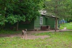 Hund nahe dem Holzhaus Lizenzfreie Stockfotos