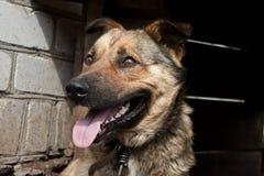 Hund nahe einer Hundehütte Stockfoto