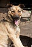 Hund nahe einer Hundehütte Stockfotos