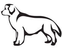 hund newfoundland royaltyfri illustrationer