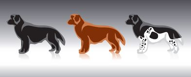 hund newfoundland vektor illustrationer