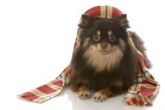 Hund oben gekleidet für Winter stockbild