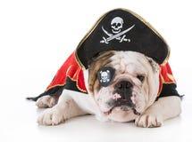 Hund oben gekleidet wie ein Pirat stockbilder