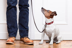 Hund och ägare royaltyfria bilder