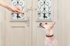 Hund och ägare med en kakafest arkivfoton