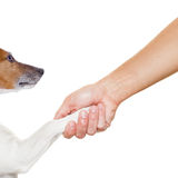 Hund- och ägarehandshaking Royaltyfria Bilder
