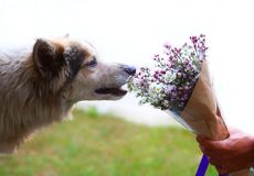 Hund- och blommabuketten arkivbilder