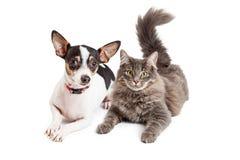 Hund och Cat Laying Together Looking Forward Royaltyfria Bilder