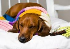 Hund och drog Royaltyfria Bilder