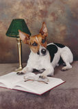 Hund och en öppen bok Arkivfoton