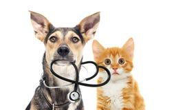 Hund och en katt och en stetoskop Arkivbilder