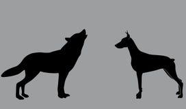 hund och en varg Arkivfoton