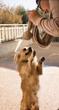Hund och flicka Fotografering för Bildbyråer