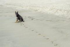 Hund och fotspår Royaltyfri Fotografi