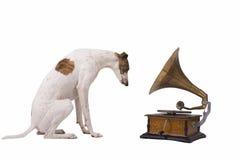 Hund och gammal grammofon Fotografering för Bildbyråer