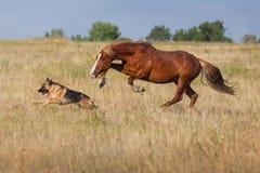Hund och häst Royaltyfri Foto
