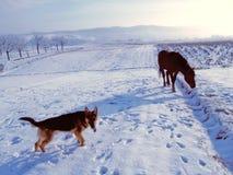 Hund och häst Royaltyfria Bilder
