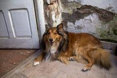Hund och hans leende royaltyfria foton