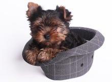 Hund och hatt Fotografering för Bildbyråer