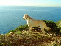 Hund och havet Fotografering för Bildbyråer