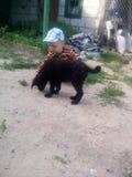Hund och Ivan, vänner, natur Arkivbild