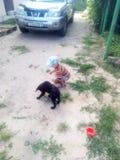 Hund och Ivan, vänner, natur Royaltyfria Bilder