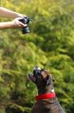 Hund och kamera Arkivfoto