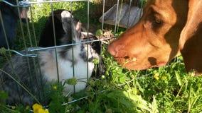 Hund och kanin Royaltyfri Bild