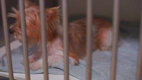 Hund och kanin i en bur stock video