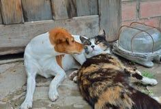 Hund och katt 2 Fotografering för Bildbyråer
